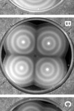 Physics and Quantitative Biology: identifying a simple genetic circuit for stripes
