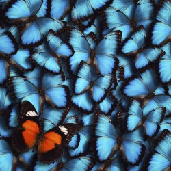 X-Ray Snapshot of Butterfly Wings Reveals Underlying Physics of Color